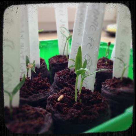 Growing1